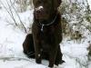 Axel im Schnee
