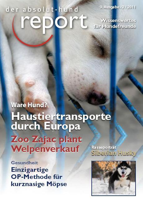 Report Absolut-Hund