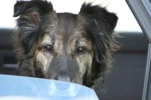 Anschaffung_Hund